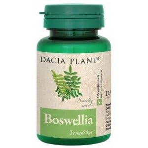 Boswellia Dacia Plant